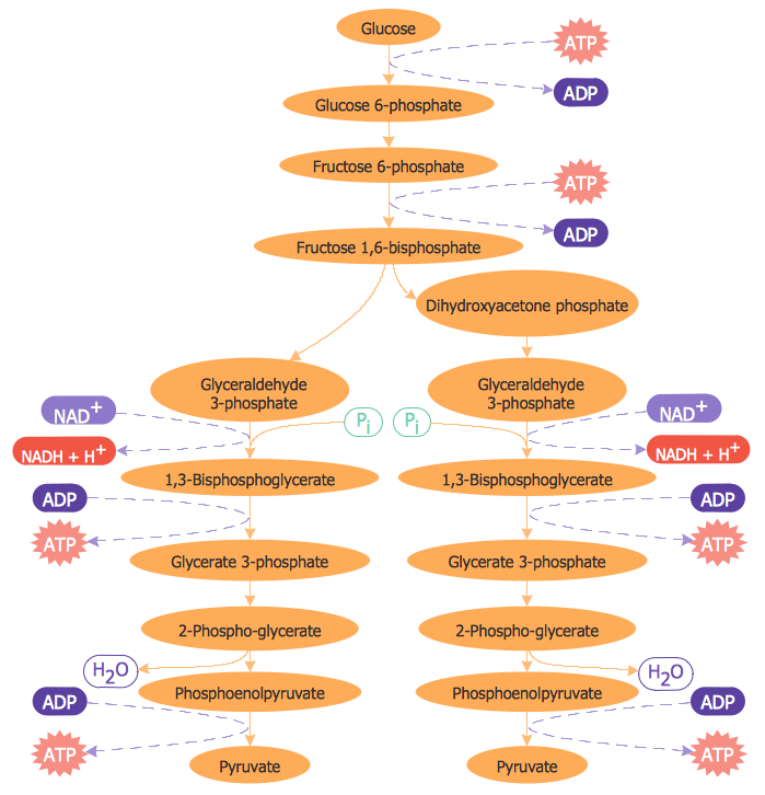 Biology Drawing – Glycolysis Overview
