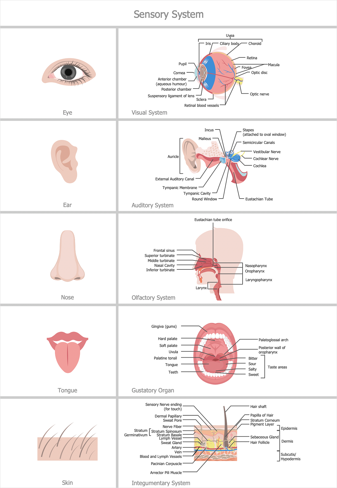 How to Make Medical Illustrations