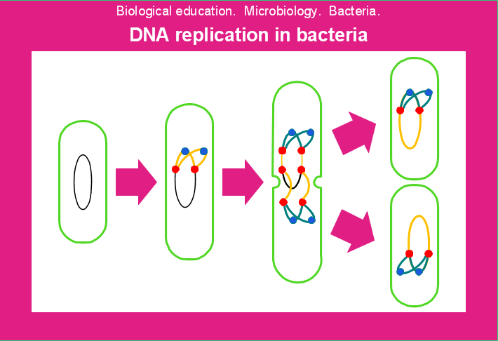 Conceptdraw samples science and education biology this example of diagram for studying of prokaryotic molecular biology and genetics is created with conceptdraw pro diagramming and vector drawing software ccuart Images