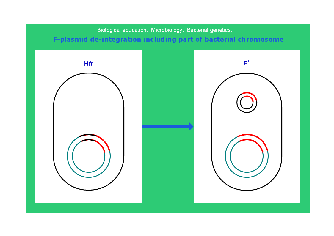 Conceptdraw samples science and education biology sample 20 microbiology f plasmid de integration including part of bacterial chromosome microbiological diagram pooptronica