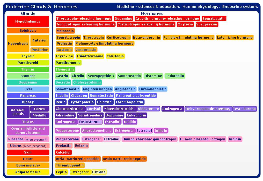 ConceptDraw Samples | Science and education — Medicine