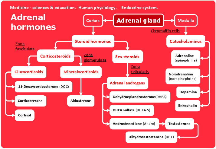 conceptdraw samples   science and education   medicinesample   human anatomy and physiology   adrenal hormones