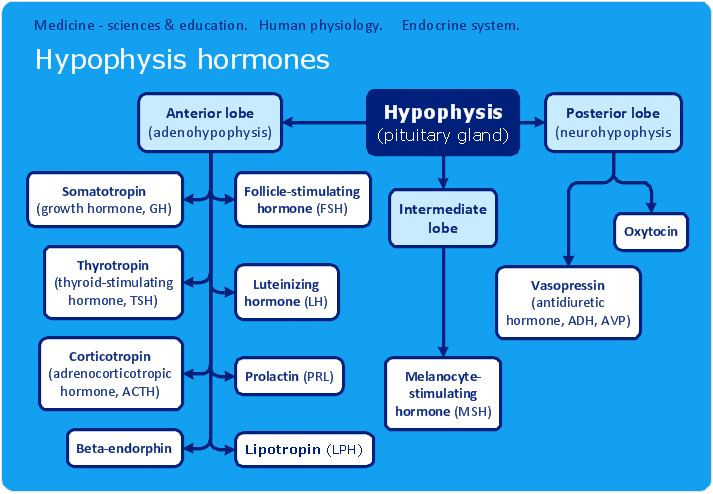 Endocrine system physiology chart 1 Custom paper Academic Writing ...