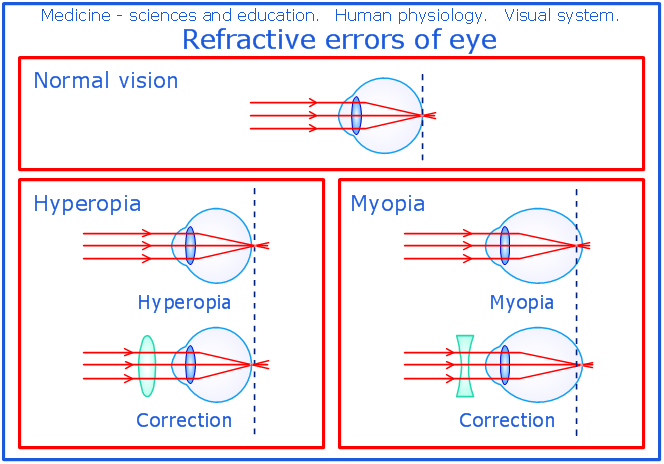 Magnificent Anatomy And Physiology Of Human Eye Vignette - Anatomy ...