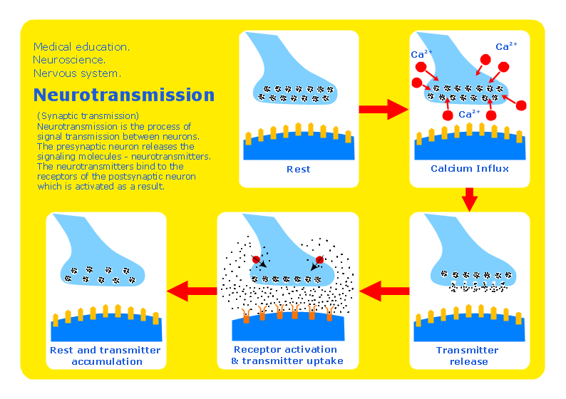 Conceptdraw samples science and education medicine sample 1 neuroscience neurotransmission diagram ccuart Gallery