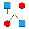 family tree, genealogy, genogram