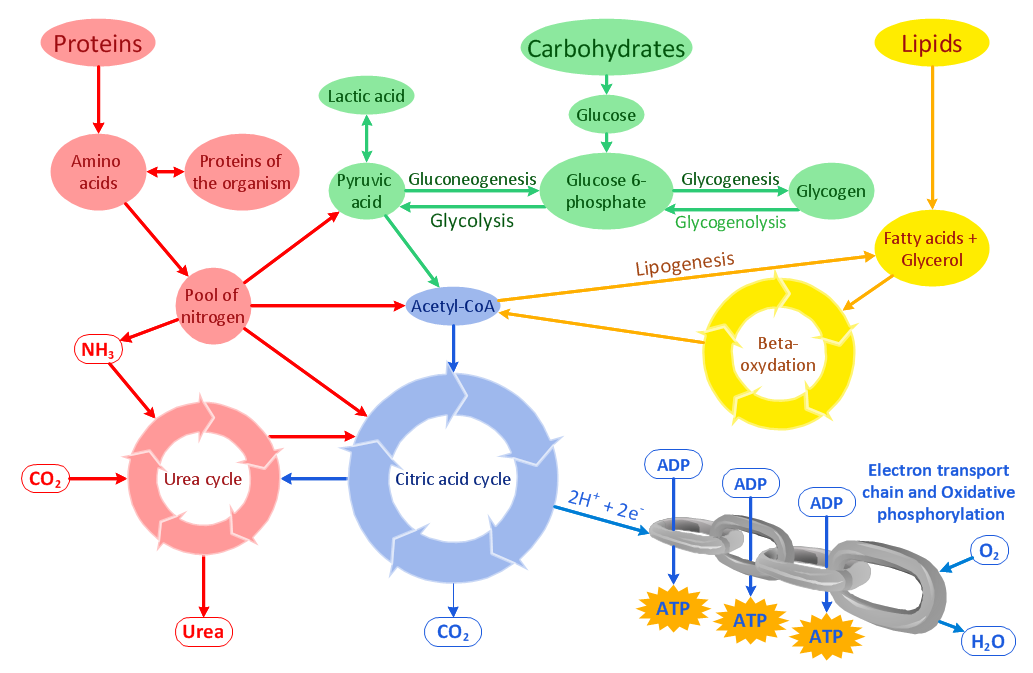 biochem task 1 The series was created for what is now the metabolic pathways task force of the english  versão 12 ou qualquer versão  description=biochem_reaction.