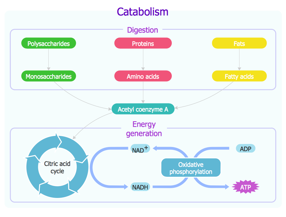 Biology Drawing - Biochemical Metabolic Pathway Map