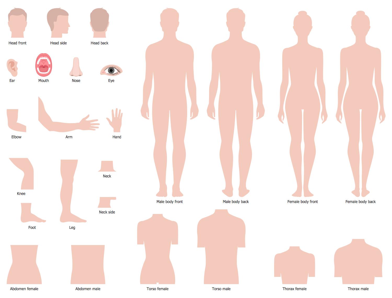 Design Elements — Human Body