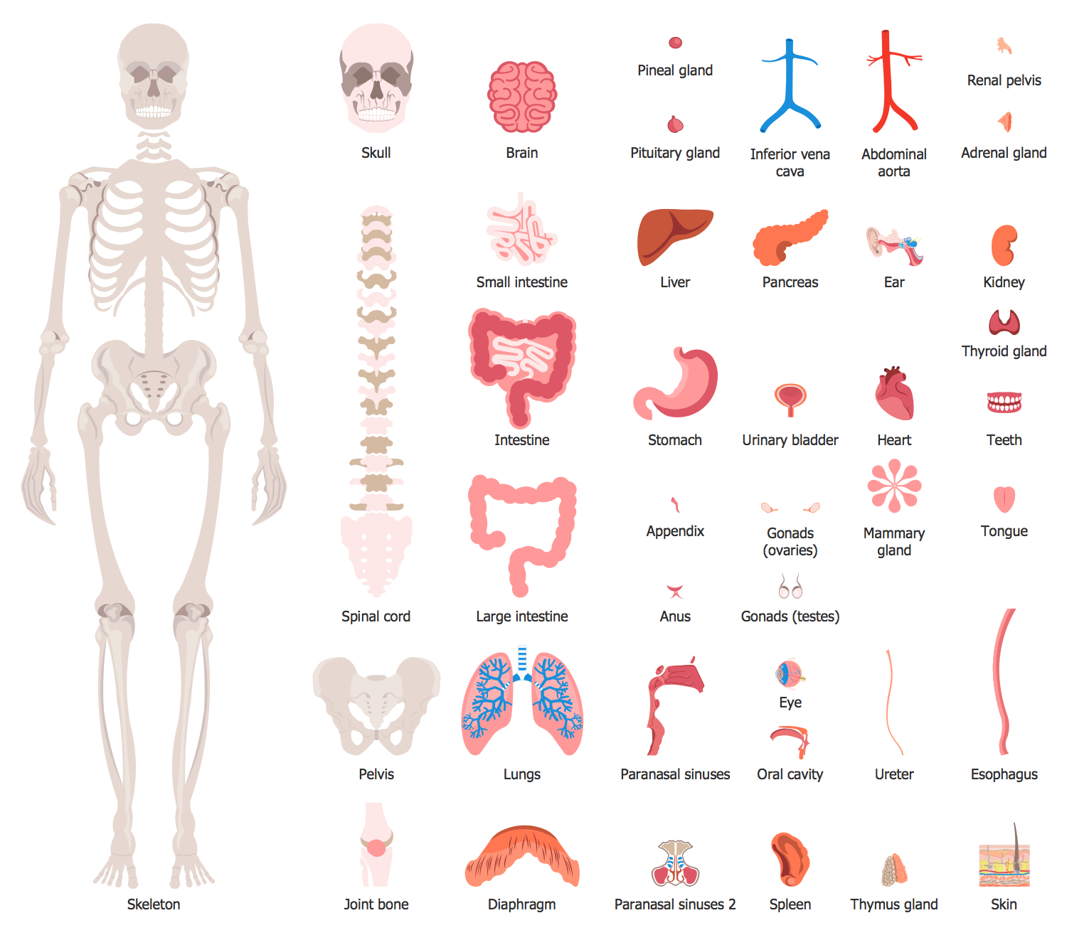 Health Human Anatomy Design Elements Human Organs
