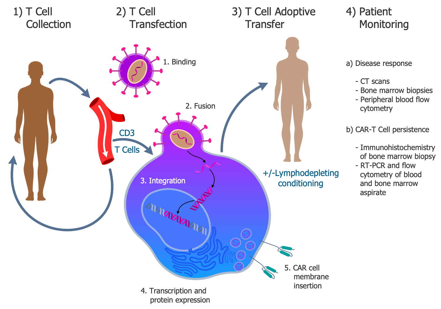CAR T-Cell Transfer Therapy