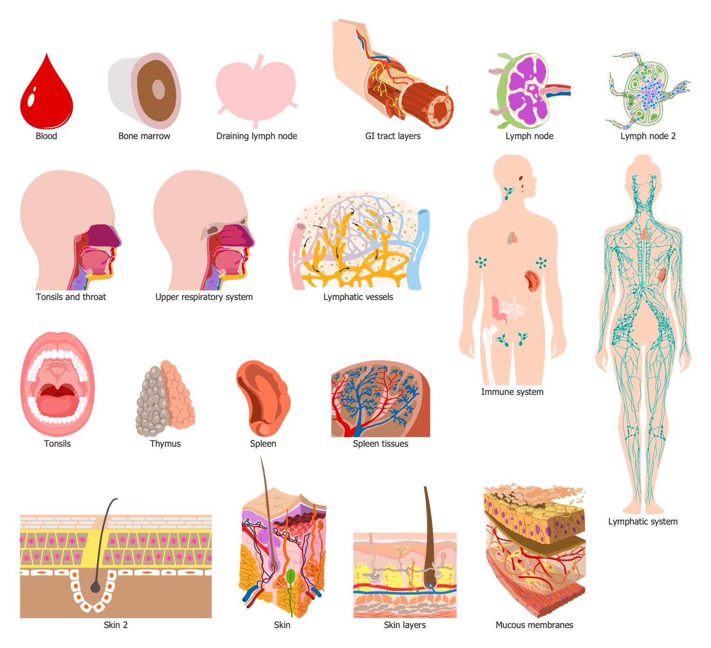 Design Elements — Immune Organs