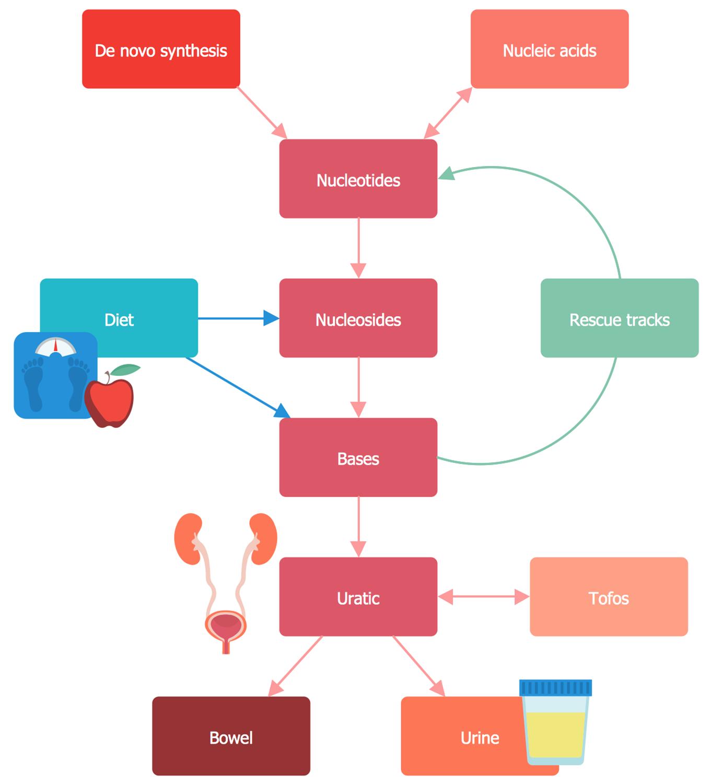 Uric Acid Metabolism